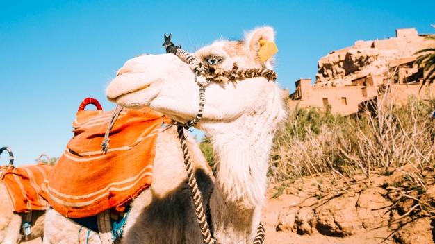 A faire à Marrakech en amoureux